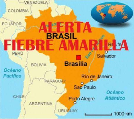 MSP actualiza mapa de riesgo por fiebre amarilla en Brasil